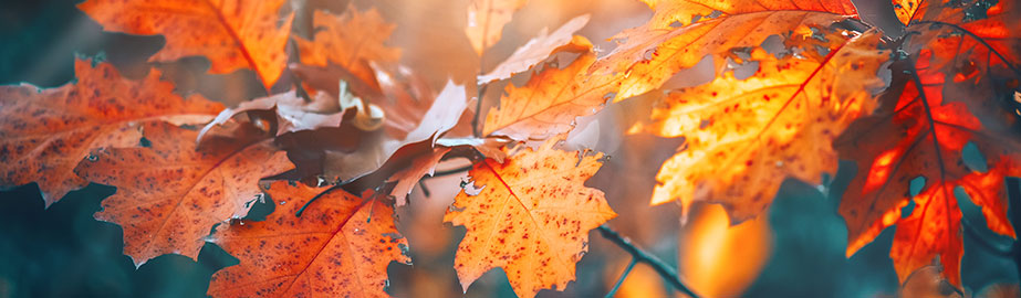 Autumn leaves in mist